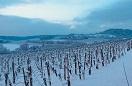 Domaine viticole Mathis Bastian